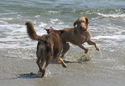 Rusty & Spirit playing