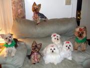 Christmas 2008 6