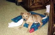 Ti'ana as a pup 1997