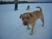 Rosco Snow 2