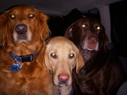 Maggie, Tanner and Tank