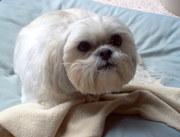 In Loving Memory of My Little Tillie