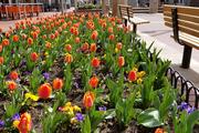 Springtime on Pearl Street
