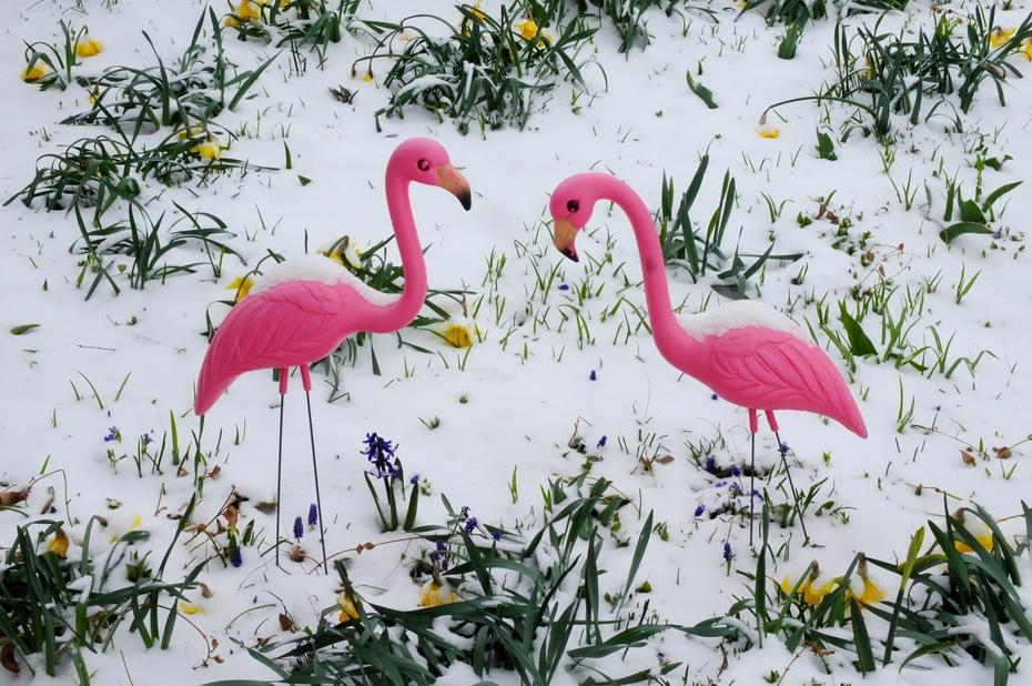 Brrr! Where did spring go?