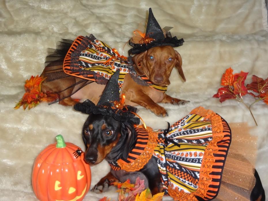 Abby and Bonnie - Halloween Doggy Dresses