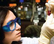 Laboratory Dust Testing