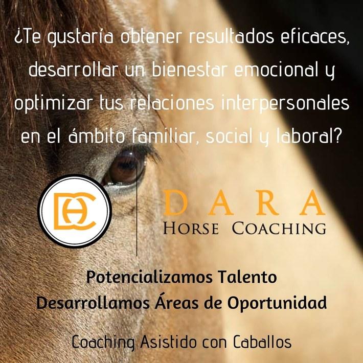 Coaching Asistido con Caballos