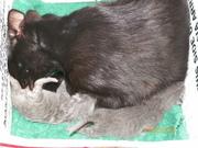 jimco2013 kittens