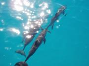 Sunny Dolphins