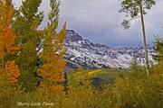 Fall Colors- Telluride, Colorado
