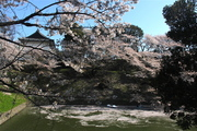 Sakura 2014