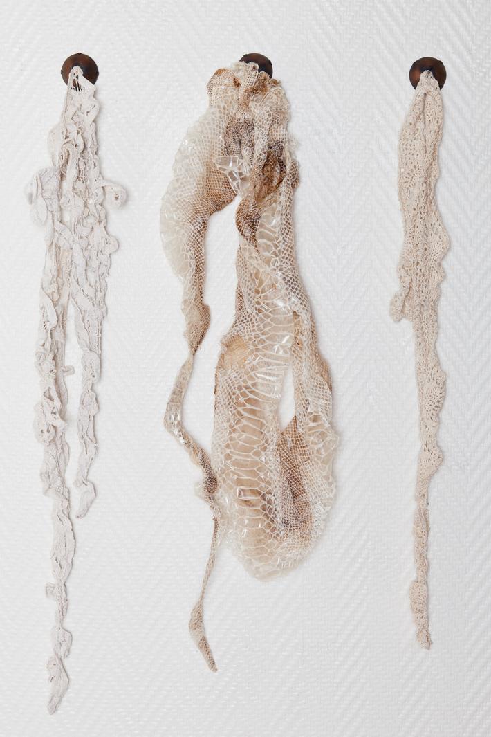 Reptilian Lace Study