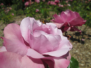 Juneparkflowerpics2013 054