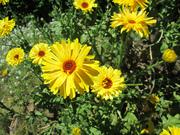 Juneparkflowerpics2013 044