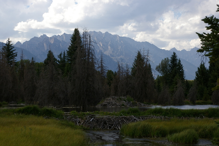Beaver Lodge and Dam, Tetons