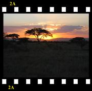 Tanzania/Kenya