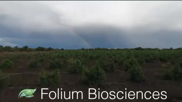 Our Advantage Vertically integrated We control every aspect of our supply chain. From farming to extraction and purification, to product manufacturing Visit Now - https://foliumbiosciences.com