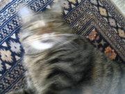 blur kitty