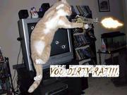 Cat with a gun