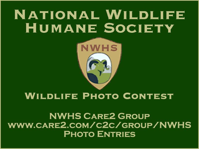 Care2 Photo Contest