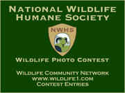 WCN Photo Contest