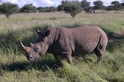 IMGP5082 Rhino-red