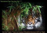 Tiger day