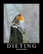 Dieting is for the birds!