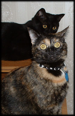 Kitty Mind Control