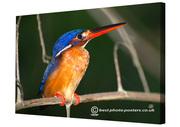 Borneo - Rainforest & Rivers, Animals & Birds