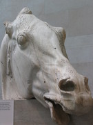 Parthenon Horse, British Museum