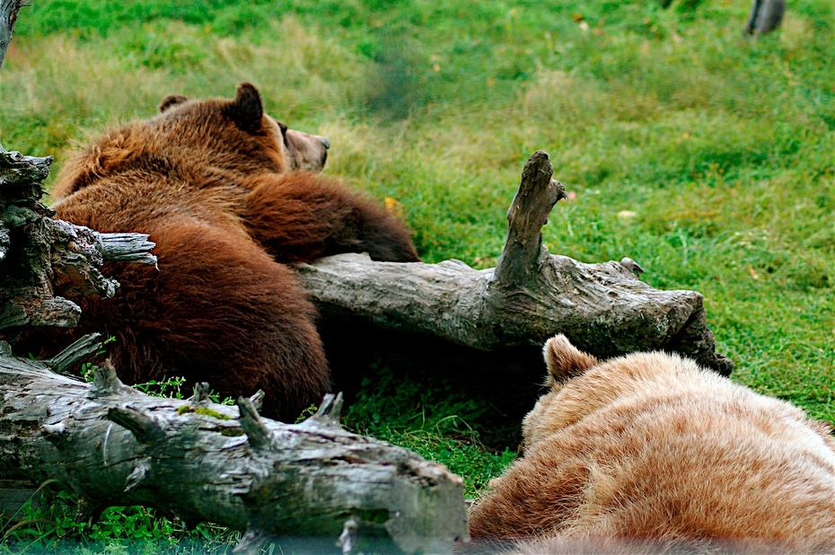Hibernating Mode