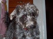 Tilly Dec 07