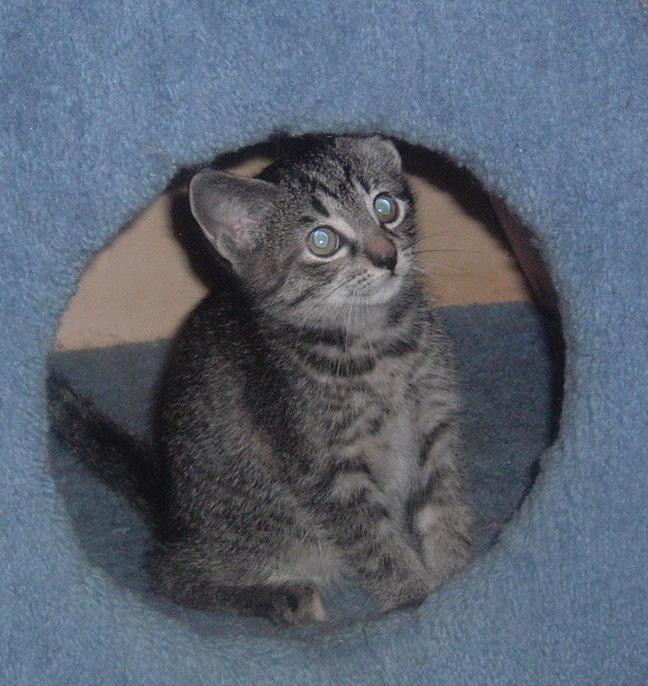 Simon, the cat
