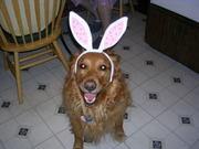 Bella bunny ears