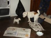 papa and pup