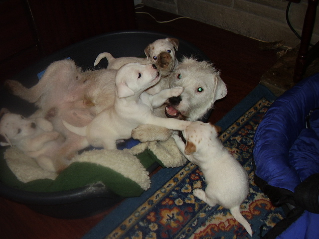 pups and papa