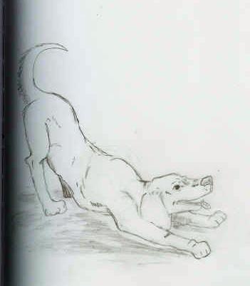doggie sketch (2)