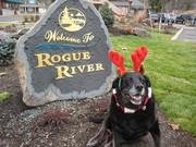 Our Dog Sally, Christmas 2007