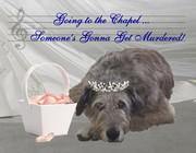 Weddings can be murder!