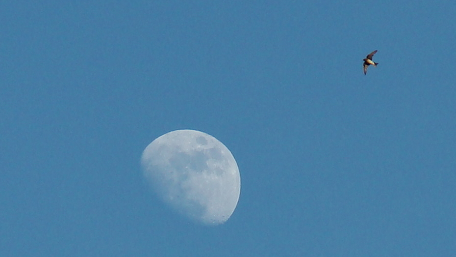 Vuelo a la Luna