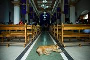 Perro en la iglesia