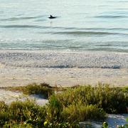 Sanibel Delfín