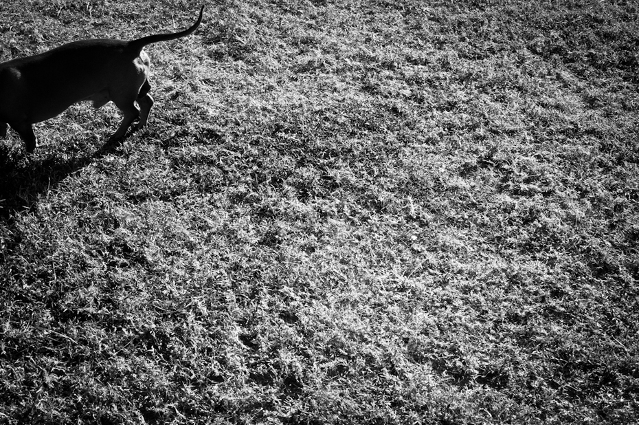 Dia 6 - Perro Salchicha - Gabriel Méndez
