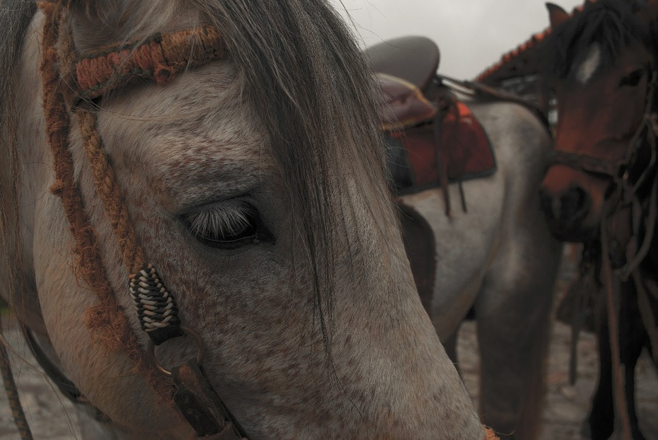 El caballo triste