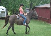 Riding Bella a TWH rescue in Sept 2008