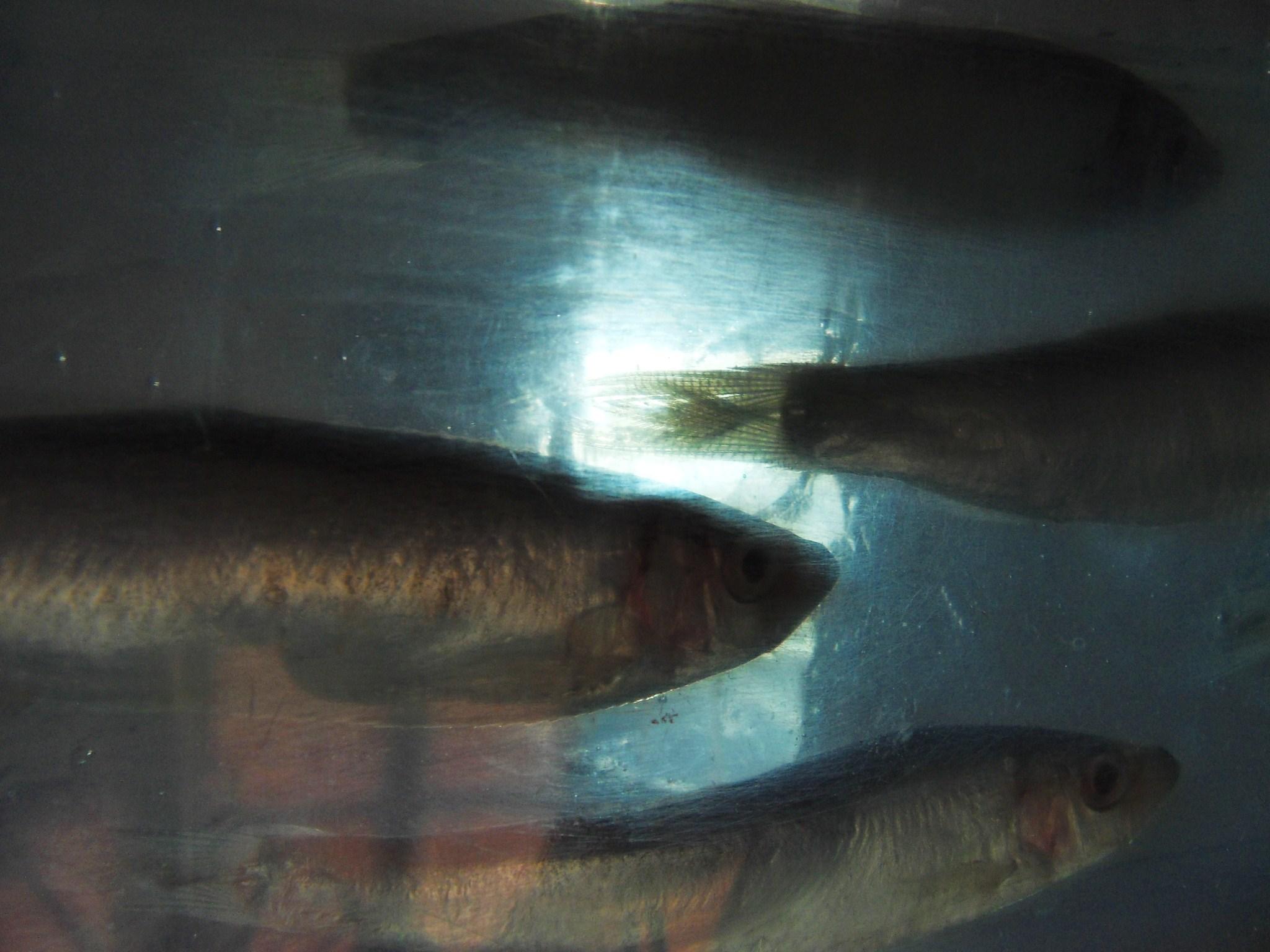 193 window thru fish