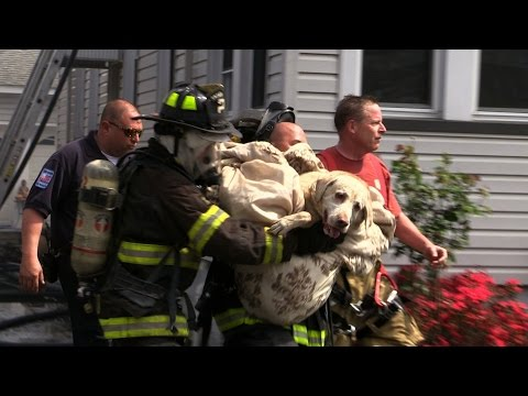 Dog Rescued by Firefighters from Totowa (NJ) Fire