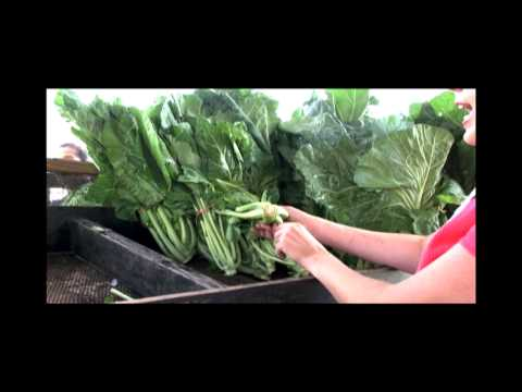 Chef Jessica: Shopping at the Farmers Market