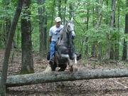 jimmy h.@ many cedars